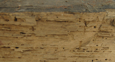 Small off cut of HMS Victory oak